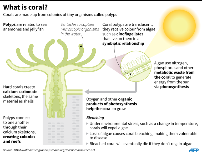 Image result for what is coral