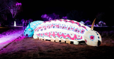 A couple of giant caterpillars glow in the desert night at Alice Springs as part of the Parrtjima light festival. Photo: James Horan, AGB Events