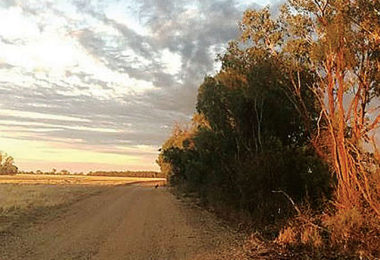 Moree, in north western NSW, sweltered through more than 50 days of temperatures above 35 degrees celsius.