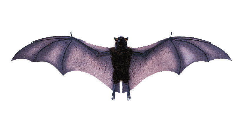 Bats use echolocation to find their way.