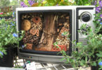 Bee TV. Artist Louise Cosgrove makes bee retreats from really old televisions, at her home on the Gold Coast in Queensland. Photo: supplied