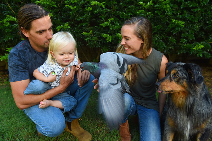 Ryan and Jennifer Tate with their son, Lennox, Alfred the pigeon and Ari. Photo: Nick McDermott