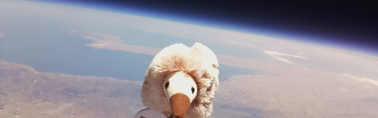 The toy echidna 32 kilometres above the ground. Photo: supplied