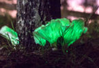 Ghost mushrooms glowing at the base of a tree. Photo: Philip Dubbin