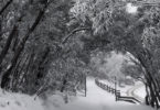 In the last days of Autumn, Mount Buller in Victoria already had a lot of snow. Photo: Mt Buller