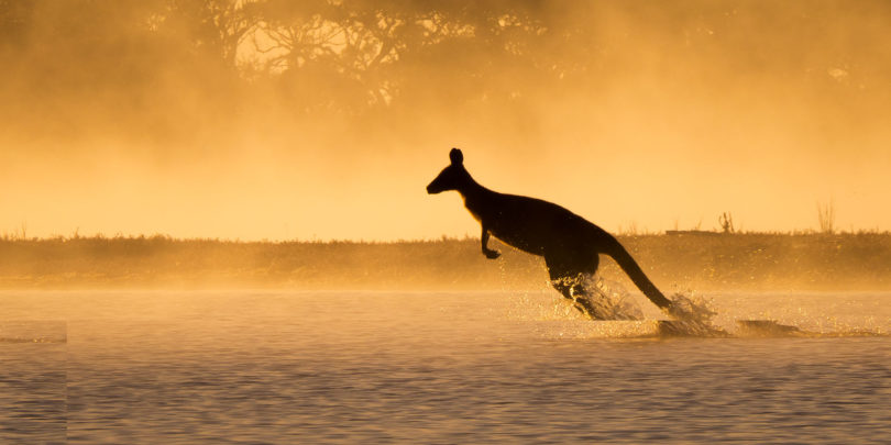 Tess Poyner, 14, is a finalist in the Australian Geographic junior Nature Photographer of the Year 2017 competition for this photo of a kangaroo, 'Morning Mist'.