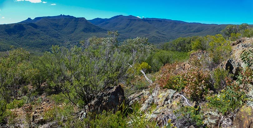 Looking up from the foothills towards the Kaputar plateau on the Nandewar Range in north-western NSW, the home of the giant pink slugs. Photo: James Faris