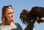 Rufus the Harris hawk held by handler Imogen Davies at The All England Lawn Tennis Club in Wimbledon, southwest London, on July 5, 2017. Photo: Justin Tallis, AFP