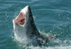 Sharks have a bad reputation. They areseen as big human attackers with mouthsfull of sharp teeth. But there's more tosharks than meets the eye. Photo: Travelbag, flickr