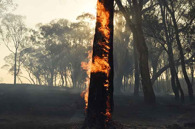 Firefighters had a tough job fighting bushires in NSW and Queensland in mid-January.