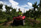 Mitchel Christie, 12, is on quad patrol at Canoelands Orchard, just outside of Sydney. At the family-run 'pick your own fruit' orchard the local kids play a big role in running the business. Photo: Dean Sewell