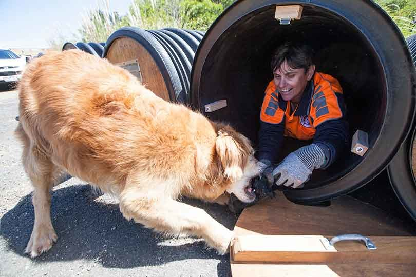Volunteer search dog trainer, Adele, from NSW, hides in a barrel and closes the door. Will then follows the human scent to find her. Photo: Elizabeth Clancy