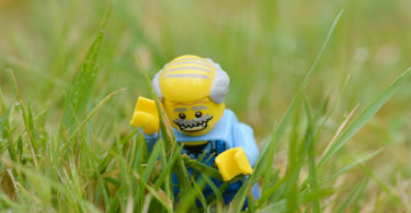 November 17, 2017 - researchers from the University of Western Australia discovered a native grass species that tastes like salt and vinegar chips. Photo: Sean Romero 'The Short News'